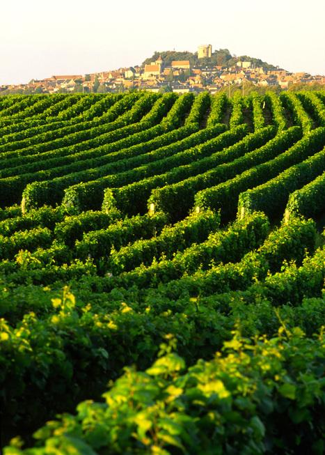 Week-end vendanges à Sancerre, 2 jours & 1 nuit dans le vignoble les 29 et 30 septembre 2012 | Agenda du vin | Scoop.it