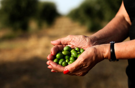 After a Recession in Portugal, the Tiny Green Fruits of Success | Always learning | Scoop.it