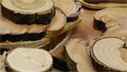 Tree Rings Reveal Fire History | Arizona Illustrated (TV) | CALS in the News | Scoop.it