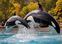 SeaWorld vs. Blackfish: A Crisis PR War Rages On Social Media - Business 2 Community | social media top stories | Scoop.it