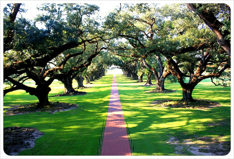 New Orleans: Get outta town! Swamps, alligators and plantations | Oak Alley Plantation: Things to see! | Scoop.it