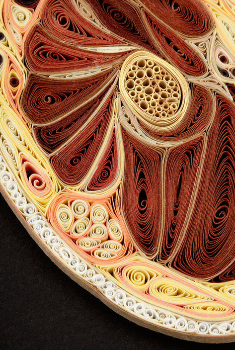 Anatomical Cross-Sections Made with Quilled Paper by Lisa Nilsson | Colossal | [THE COOL STUFF] | Scoop.it