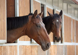 Selling a Horse on Installment Payments? What You Need to Know - Los Angeles Lawyer and Law Firm | Catanese & Wells | Equine Law | Scoop.it