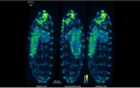 New high-speed microscope images entire living organisms at high resolution | DigitAG& journal | Scoop.it