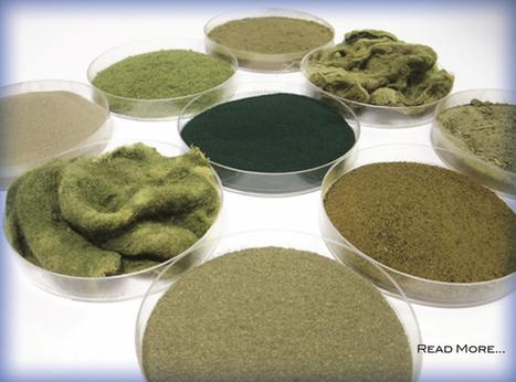 Algix Developing Algal-based Plastics | Bio-based Chemicals | Scoop.it