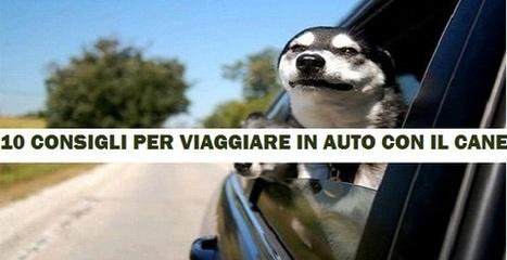 Vacanze con gli animali: 10 consigli per viaggiare in auto con il cane - greenMe.it | Oltre il Cuore di Lucilla News | Scoop.it