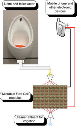 Mobile phone powered by urine | Chemistry World | Chemistry | Scoop.it