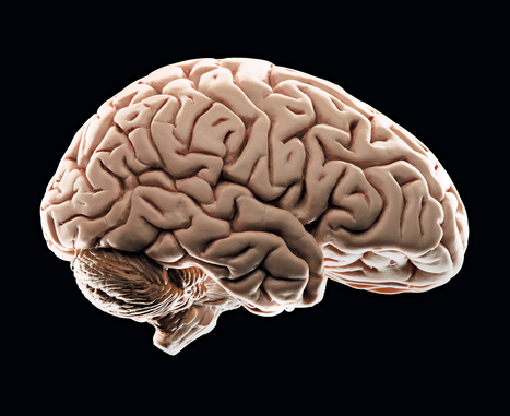 Growing up poor is so stressful, it can affect brain development | Criminology and Economic Theory | Scoop.it