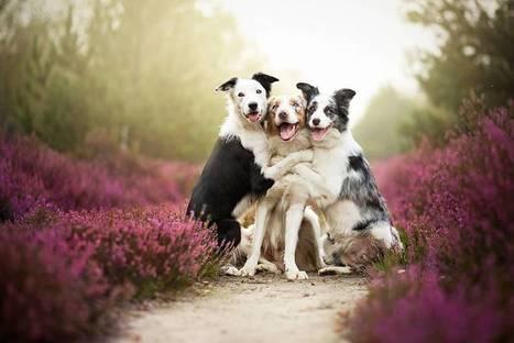 la fotografa che scatta foto incredibili ai suoi amici preferiti, i cani | Dog Style | Scoop.it