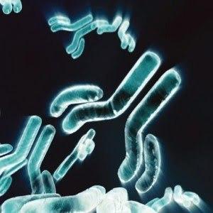 AstraZeneca developing anticlotting reversal mab for heart drug Brilinta | Laboratorios Wachoski | Scoop.it
