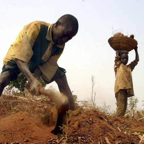 How Climate Change Politics Are Ruining African Agriculture | Food issues | Scoop.it