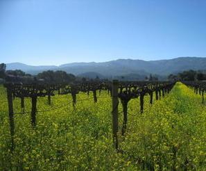 Napa vineyards blend perfectly with Tahoe ski resorts   Boston Herald   Wine Geographic   Scoop.it