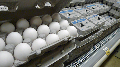 Salmonella tests stepped up in egg industry - Saskatchewan - CBC News | Sistemas de Gestión | Scoop.it
