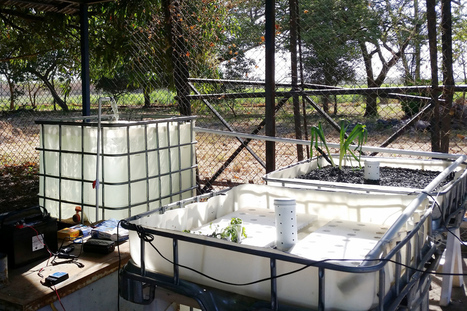 Costa Rica experiments with aquaponics to fight drought | Aquaponics in Action | Scoop.it