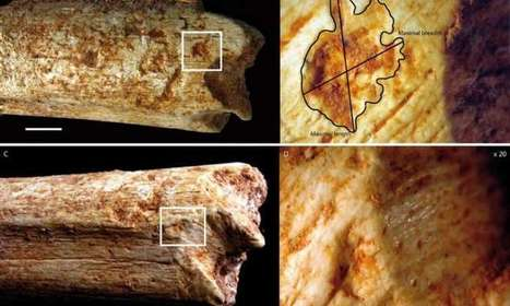 Hominins may have been food for carnivores 500,000 years ago | Aux origines | Scoop.it