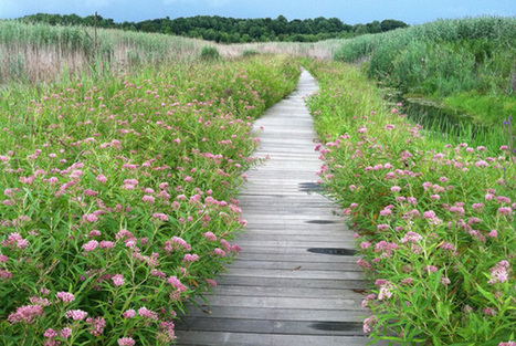 Back to nature: 10 best examples of ecological restoration in NEO | GreenCityBlueLake | Organic Farming | Scoop.it