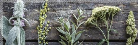 Atelier gratuit de création d'un herbier normand ! | DD Haute-Normandie | Scoop.it