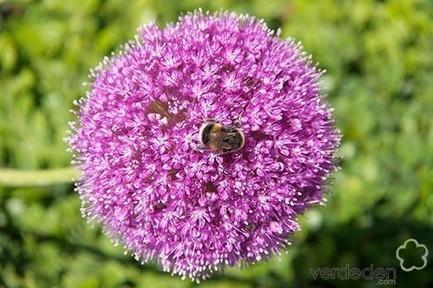 El cultivo ecológico en nuestros huertos y jardines - PLOG | verdeden | Scoop.it