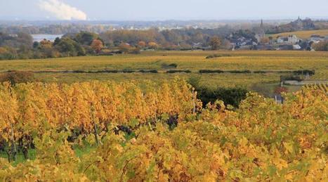 Vin. La famille des vins de Loire s'unifie | Le vin quotidien | Scoop.it