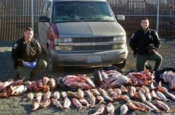 Fish poacher charged for trying to run over wildlife agent | Wildlife Trafficking: Who Does it? Allows it? | Scoop.it