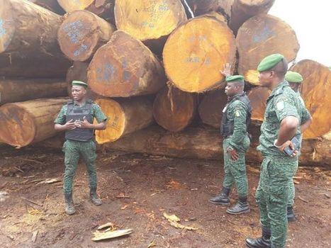Société / lutte contre la fraude dans l'exploitation forestière:  le ministre des eaux et forets ordonne la fermeture de la société  THANRY | Afrique: développement durable et environnement | Scoop.it
