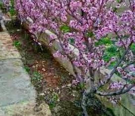 Spring Gardening Tips - Leovan Design   Landscape and Garden Design   Scoop.it