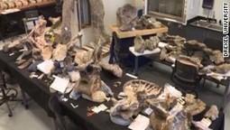 Museum builds dinosaur in 30 seconds | Vloasis sci-tech | Scoop.it