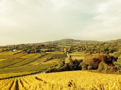 Terroirist Tuesday: Burgundy - Of Monks, Dukes, Bad Choices & Frickin' Good Wine   binNotes France - Wine & Culture   Scoop.it