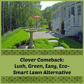 Home and Family Products: Clover Comeback: Today's Twist to a Lush, Green, Easy, Eco-Smart Lawn Alternative | Homemaking | Scoop.it