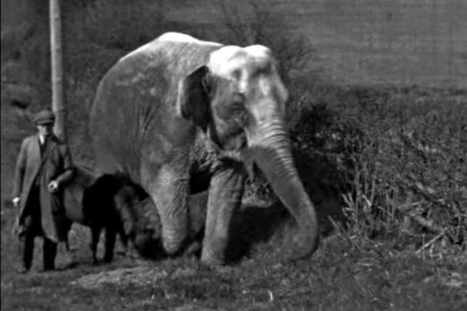 Watch: Historic film of elephant that lived in Shropshire | Pachyderm Magazine | Scoop.it