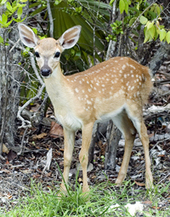 Mammals - Everglades National Park | Everglades Tour Guide | Scoop.it