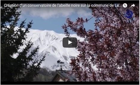 VIDEO. Création d'un conservatoire de l'abeille noire dans le Parc de la Vanoise - Le rucher du Dje | abeille noire | Scoop.it