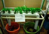 Rescatan ecosistemas y producen alimentos con acuaponia   acuaponia,sinergia de hidroponia y acuicultura   Scoop.it
