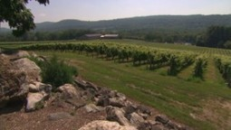 Say it ain't so...Is there a global wine drought?   Vitabella Wine Daily Gossip   Scoop.it