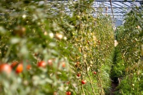 Agroécologie et permaculture : plus ou moins productives que l'agriculture industrielle ? | Agriculture Biologique | Scoop.it