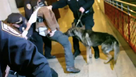 After a Police Dog Bit His Leg, This Protester Was Jailed Thanks to a Cop's Testilying | VICE United States | Criminal Justice in America | Scoop.it