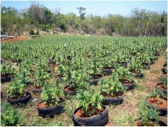 Police Use Google Earth to Locate Marijuana Grower's Crop   Criminal Defense Attorney   Scoop.it