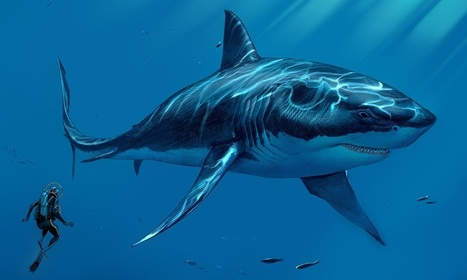 Megalodon: The Prehistoric World's Worst Nightmare | Crazy Science !! | Scoop.it