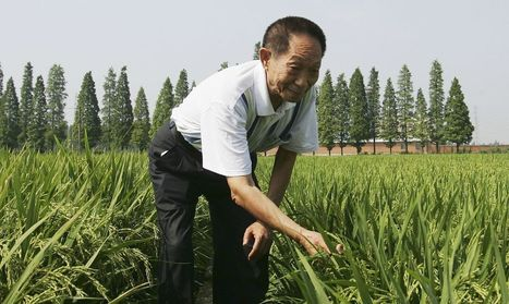 China Wants GMOs. The Chinese People Don't. | Questions de développement ... | Scoop.it