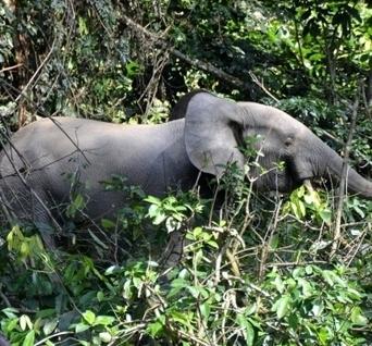 Au Cameroun et au Congo le trafic de l'ivoire devient incontrôlable ! | Cameroun Tourisme, cultures et nature | Scoop.it