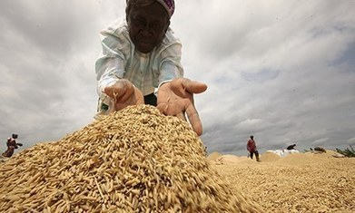 Dramatic decline in industrial agriculture could herald 'peak food' | naked food | Scoop.it