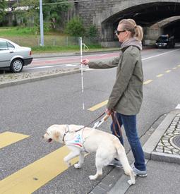 Flow Magazine - Εκπαιδεύουν σκύλους-οδηγούς με δωρεές | Flowmagazine | Scoop.it