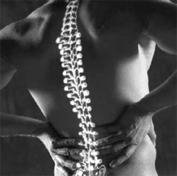 Low Back Pain | Mark Kreoger Physiotherapy & Associates | Scoop.it