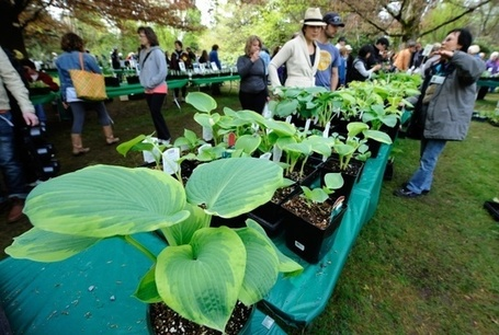 Your guide to spring plant sales | Vancouver Sun | Common Sense Gardening | Scoop.it