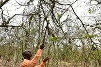 En Côte d'Ivoire, des chenilles dévastent des milliers d'hectares de cacao | Fruits & légumes à l'international | Scoop.it
