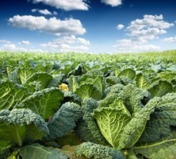 Is Kale The New Spinach? | The Basic Life | Scoop.it