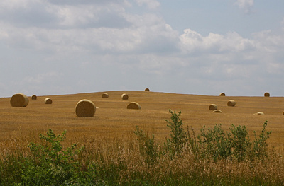 Land prices and the real value of farmland   Sustain Our Earth   Scoop.it