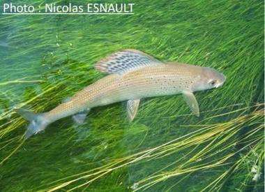Pêche à la mouche pour bien débuter-Ma boite à pêche   w3p-annuaire.com   Scoop.it