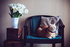 More Space Meow! Learn to Keep Your Cat Happy in a Small Home | Home Improvement | Scoop.it