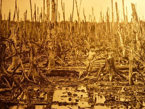 La guerre du Viêt Nam continue - Agent Orange Viêt Nam   Guerre du Vietnam   Scoop.it